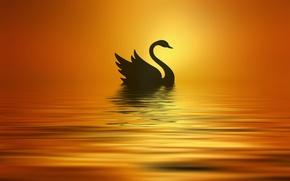 Picture the sun, lake, styling, silhouette, Swan, Josep Sumalla