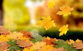 Picture autumn, foliage, drop, heap