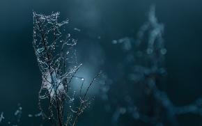 Picture drops, macro, web, branch