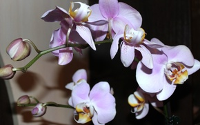 Picture flowers, beauty, orchids
