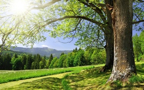 Wallpaper greens, forest, summer, grass, the sun, trees, mountains, glare, horizon
