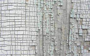 Wallpaper tree, paint, pieces, Board