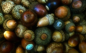 Picture autumn, fruit, oak, acorns