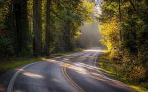 Picture road, autumn, forest, trees, CA, California, Sonoma County, Bohemian Highway, SONOMA