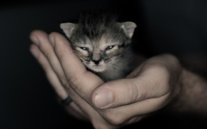 Picture hand, baby, muzzle, kitty, Kote