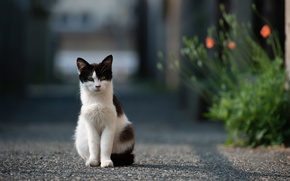 Picture road, cat, cat, asphalt, flowers, street