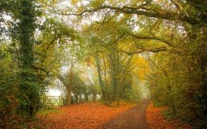 Picture autumn, fog, path