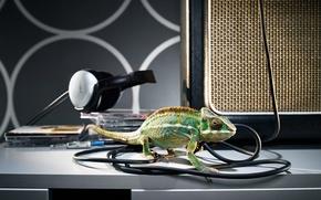 Wallpaper wire, chameleon, headphones, drives