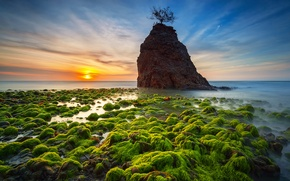 Picture sea, the sky, clouds, sunset, tree, stone, horizon, mucus