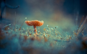 Wallpaper fungus, Antonio Coelho, Rosa, grass, mushroom, moss