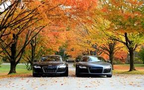 Picture auto, autumn, trees, machine, Audi R8 V10
