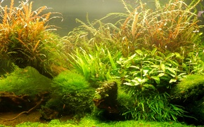 Picture fish, widescreen, Wallpaper, aquarium, fish, plants, wallpaper, widescreen, background, the Wallpapers, full screen, HD wallpapers, …