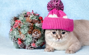 Picture cat, cat, hat, decoration