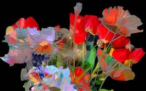 Picture line, flowers, Maki, petals