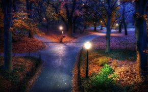 Picture FOREST, TREES, LIGHTS, AUTUMN, FOLIAGE, PARK, ALLEY, The EVENING
