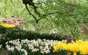 Picture trees, flowers, branches, pond, Park, foliage, tulips, Netherlands, daffodils, Keukenhof Gardens