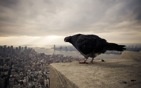 Picture the sky, the city, bird, dove, height