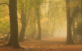 Picture autumn, forest, nature, fog