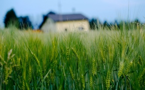 Picture widescreen, HD wallpapers, Wallpaper, house, wheat, field, rye, full screen, background, fullscreen, macro, widescreen, background, …