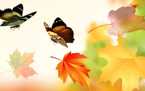 Picture autumn, leaves, collage, butterfly, wings