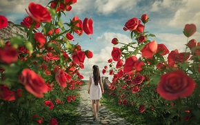 Picture girl, roses, trail, Alice in the land of roses