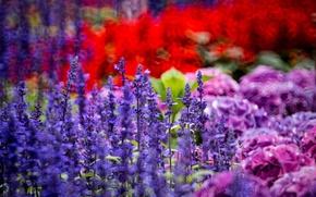 Picture flowers, lavender, hydrangea, Hong Kong Island, the Klum, Braemar Hill