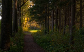 Picture autumn, forest, light, path