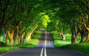 Wallpaper summer, road, forest