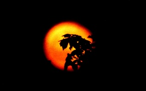 Picture the sky, leaves, Shine, branch, silhouette