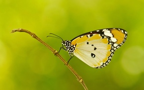 Picture sprig, pattern, butterfly, plant, wings, moth