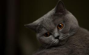 Picture eyes, cat, muzzle