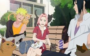 Picture girl, game, Sasuke, Naruto, Sakura, nothing, anime, cat, boy, ninja, asian, Uchiha, manga, Uzumaki, hokage, …