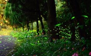 Picture fireflies, glare, bokeh, nature