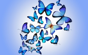 Picture butterfly, colorful, blue, butterflies, design by Marika