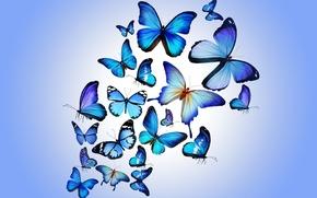 Wallpaper butterfly, colorful, blue, butterflies, design by Marika