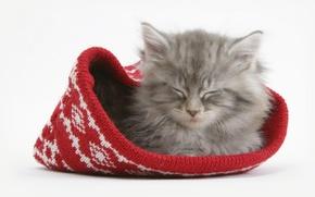 Wallpaper kitty, hat, Cat, sleeping