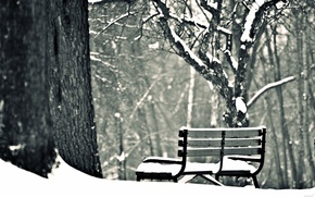 Picture winter, snow, trees, bench, background, widescreen, Wallpaper, mood, shop, shop, wallpaper, bench, widescreen, winter, background, ...