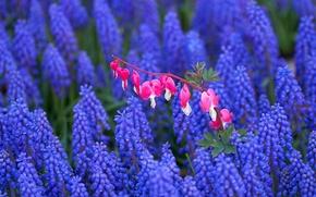 Wallpaper field, flowers, pink, field, lilac, broken heart