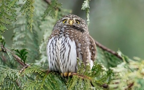 Wallpaper owl, forest, nature