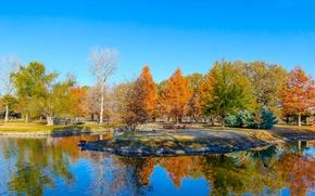 Picture leaves, trees, pond, USA, Texas, Clark Gardens, Botanical Park, a crimson autumn