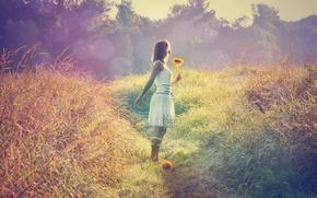 Picture field, grass, girl, light, sunflower