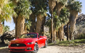 Picture 2014, Convertible, Ford, Mustang, Mustang, Ford