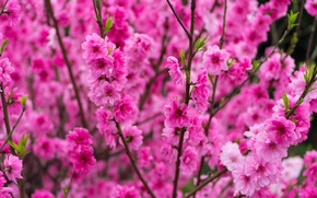 Picture flowers, tree, spring, garden