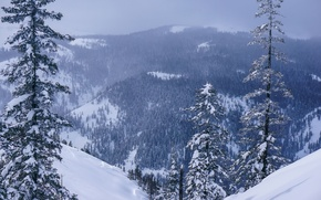 Picture winter, forest, snow, trees, mountains, panorama, Russia, Khabarovsk Krai