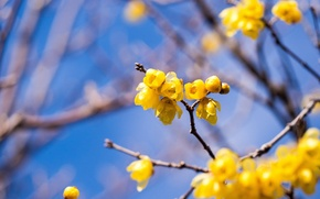Picture the sky, branches, spring, garden, flowering