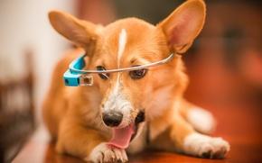 Picture language, look, face, dog, headphones