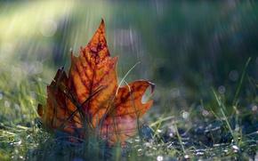 Picture macro, nature, sheet