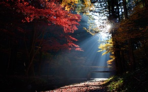 Picture forest, the sun, rays, light, trees, stream, the bridge