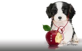 Wallpaper music, Apple, headphones, art, player, puppy, children's. Lorri Kajenna