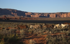 Picture desert, horse, photographer, canyon, pony, AZ, North America, usa, arizona, Navajo, Indians, jeff mitton, north …